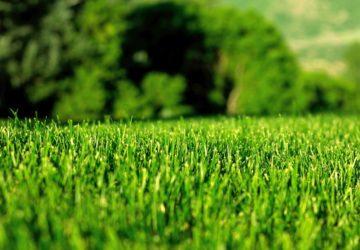 Как самостоятельно создать газон на дачном участке
